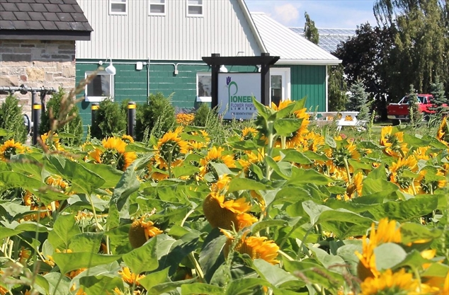 Pioneer Flower Farms picking up the pieces a week after devastating fire
