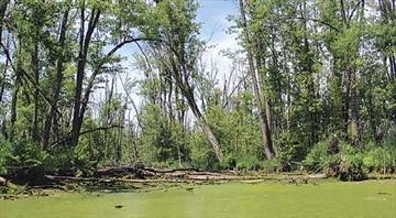 Appleton Wetland Report talk kicks off naturalist series– Image 1