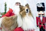Pets need to meet Santa, too