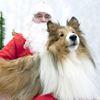 Pets need to meet Santa, too