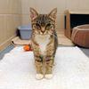 Adopt-A-Pet: Zara needs a home
