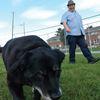 Dog park questions