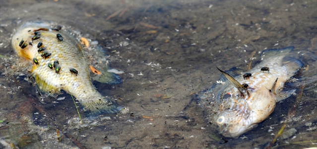 Marden Pond Fish Kill Mystery Will Continue Until At Least