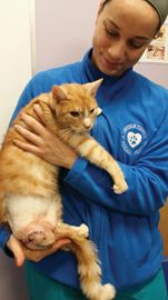 Cruelty investigation into cat with missing leg