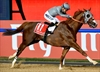 California Chrome wins Horse of the Year at Eclipse Awards-Image1