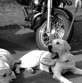 Annual motorcycle ride to benefit guide dog training– Image 1