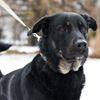 Pet of the Week: Titus