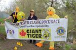 Duck races returning to Alliston