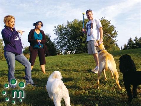 Off Leash Dog Park Ajax