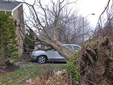 High winds leaves destruction in wake