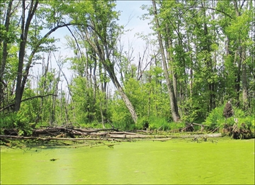 Appleton Wetland at tipping point states report from Field Naturalists– Image 1