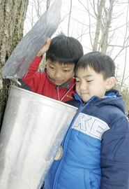 Jonathan, left, and Edwin Wang take a peek inside the maple syrup bucket.