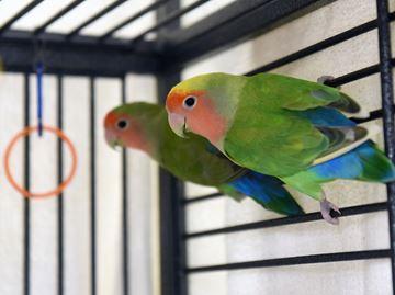 Meet Sunny and Nunny.