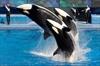 Ontario to ban sale, breeding of killer whales-Image1