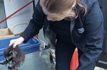 Rescued raccoons