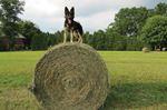 Autum day hay