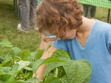 Carp's Community Garden a 'growing' success