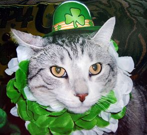 Kiss me-ow, I'm Irish