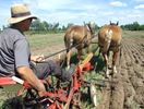 Plowing Match underway