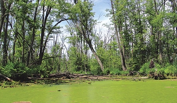 Appleton Wetland Report talk to launch naturalist series– Image 1