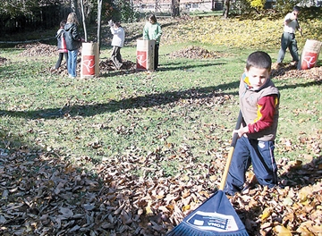 Scarborough mechanical leaf collection schedule for November released by city-image1