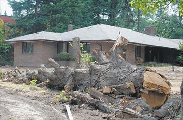 Bayview Ridge tree damage