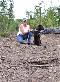 Ash borer now killing city's woodlots– Image 1