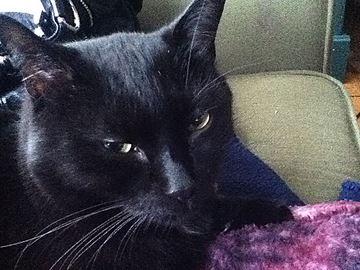 Eclipse cat