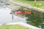 Driver arrested after plunging car into Lagoon City canal