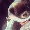 Kelly Osbourne's dog undergoes surgery-Image1