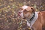 Janelle needs a home