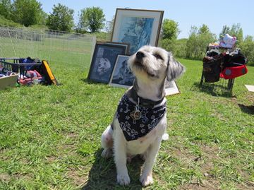 Peterborough Dogfest - May 23, 2015