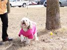 Doggy Easter Egg Hunt supports worthy cause