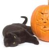 Protect your cats at Halloween