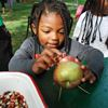 Scenes from Battlefield House Museum and Park's annual Apple Festival