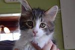Einsten the cat stolen