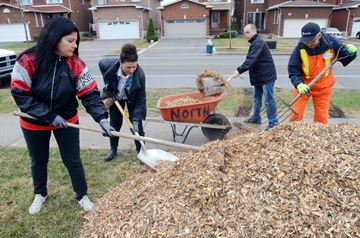 ScotiaBank volunteers Nina Iantorno, Letizia Francavilla and Mike Castellano along with Onofrio Calo of the Vaughan horticultural department haul mulch to newly-planted trees along Chancellor Drive adjacent to the Chancellor District Park.