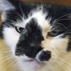 Older Cat Benefits