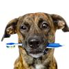 What you need to know about dental care for your pets