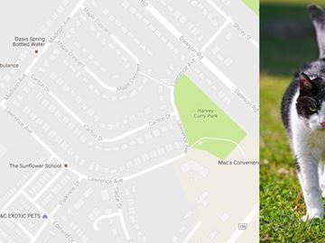 Animals being killed, mutilated in Orangeville neighbourhood