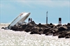 Families of 2 killed in Jose Fernandez boat crash get lawyer-Image1