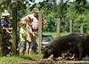 Farm crawl