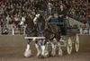 2015 World Clydesdale Show