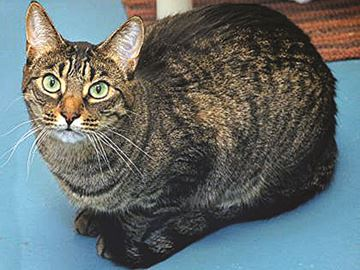 Gabriel the Cat