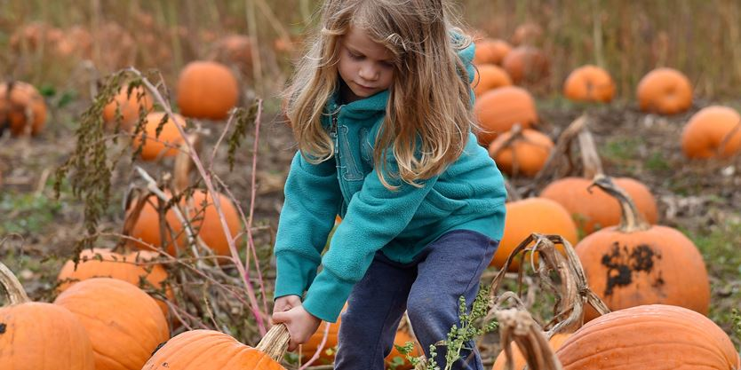 Places to pick your own pumpkin in York Region