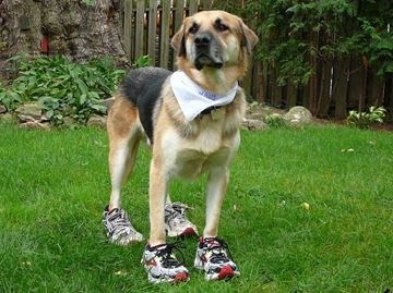 Ray laces up for Oakville Mutt Strutt