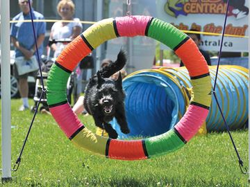 Dog Days of Scugog, summer are here again