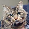 Pet of the Week Kitkat