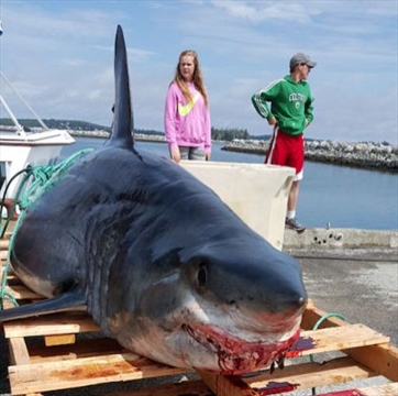 biggest great white shark ever caught in the world