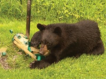 Bear in Brighton